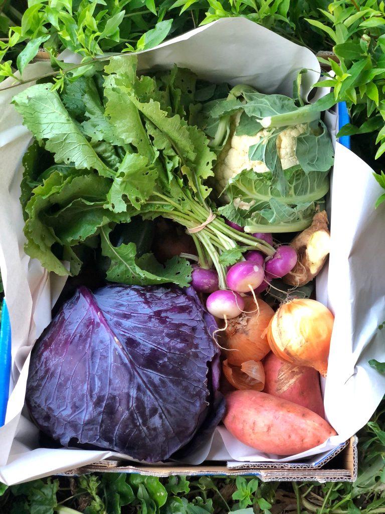 Gathered Organics vegetable Box